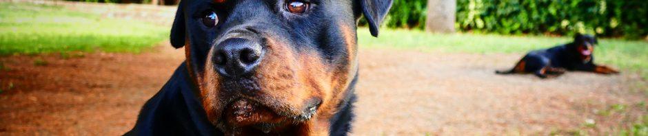 Indianapolis Dog Bite Lawyers 317-881-2700
